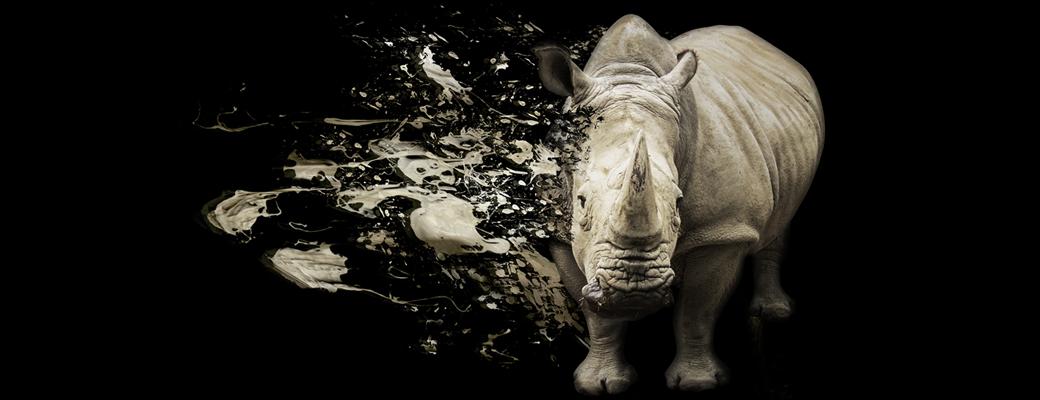 Rhinox_Nashorn_Homepage